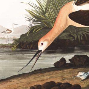Birds & Botanicals